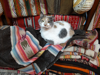 Cat at a shop in Cusco