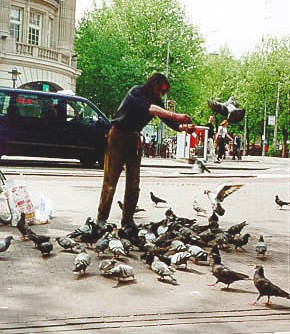 The Birdman of Amsterdam