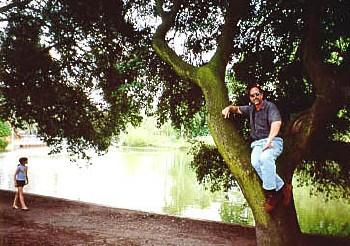 dml in a tree at Battersea Park